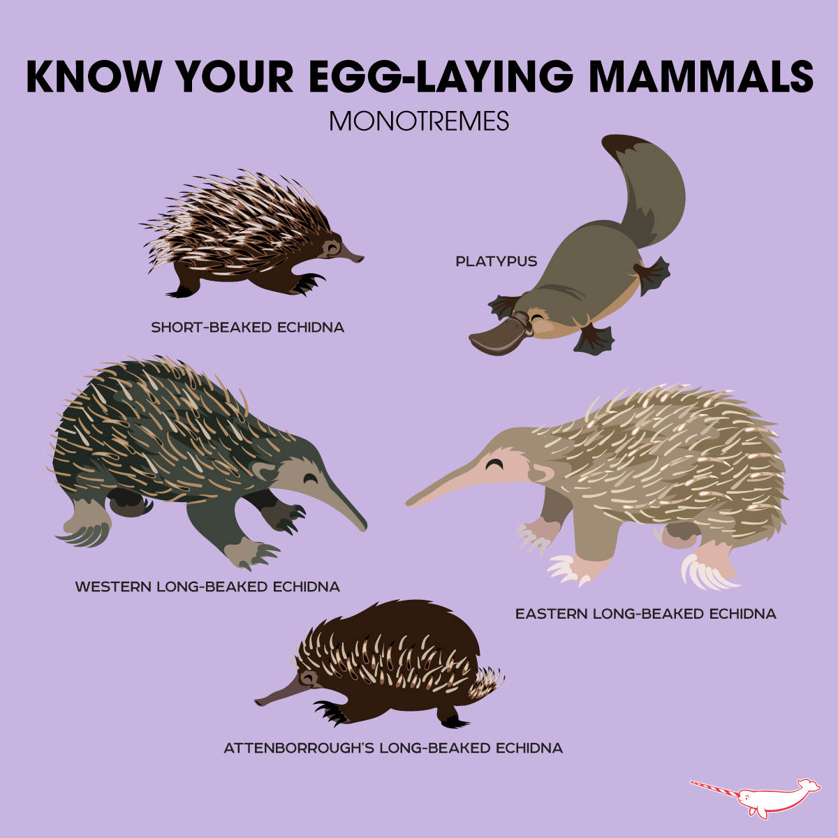 Who Isn T Excited By Egg Laying Mammals This Is A Great