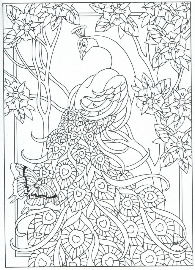 peacock coloring colouring page adults