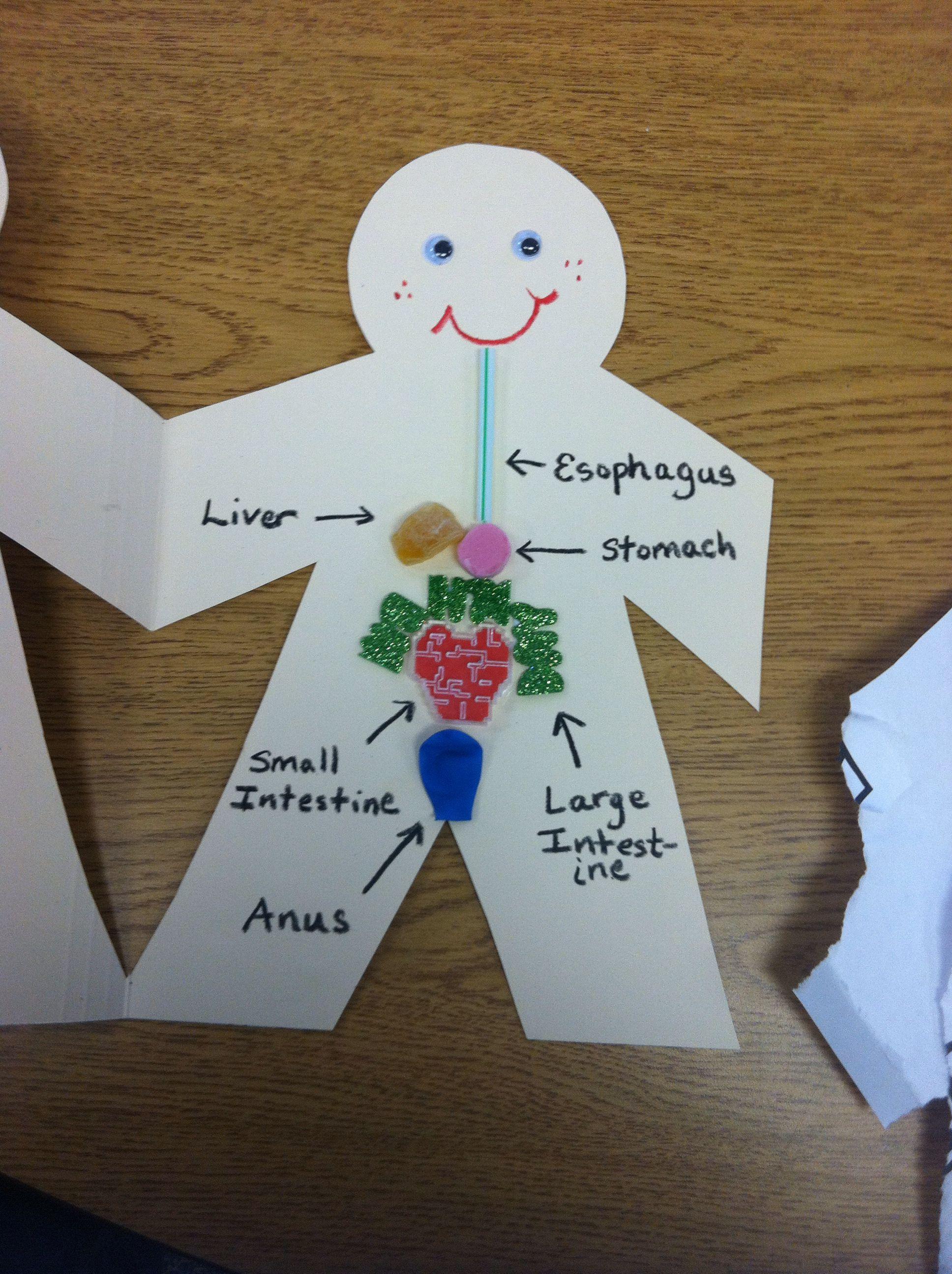 4th grade digestive system diagram wye delta starter connection school project pinterest