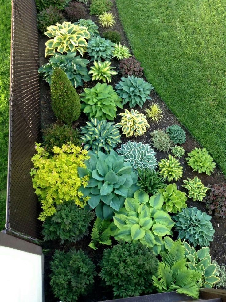 Cool Gorgeous Hosta Planting Perfect For The Shade! Garden
