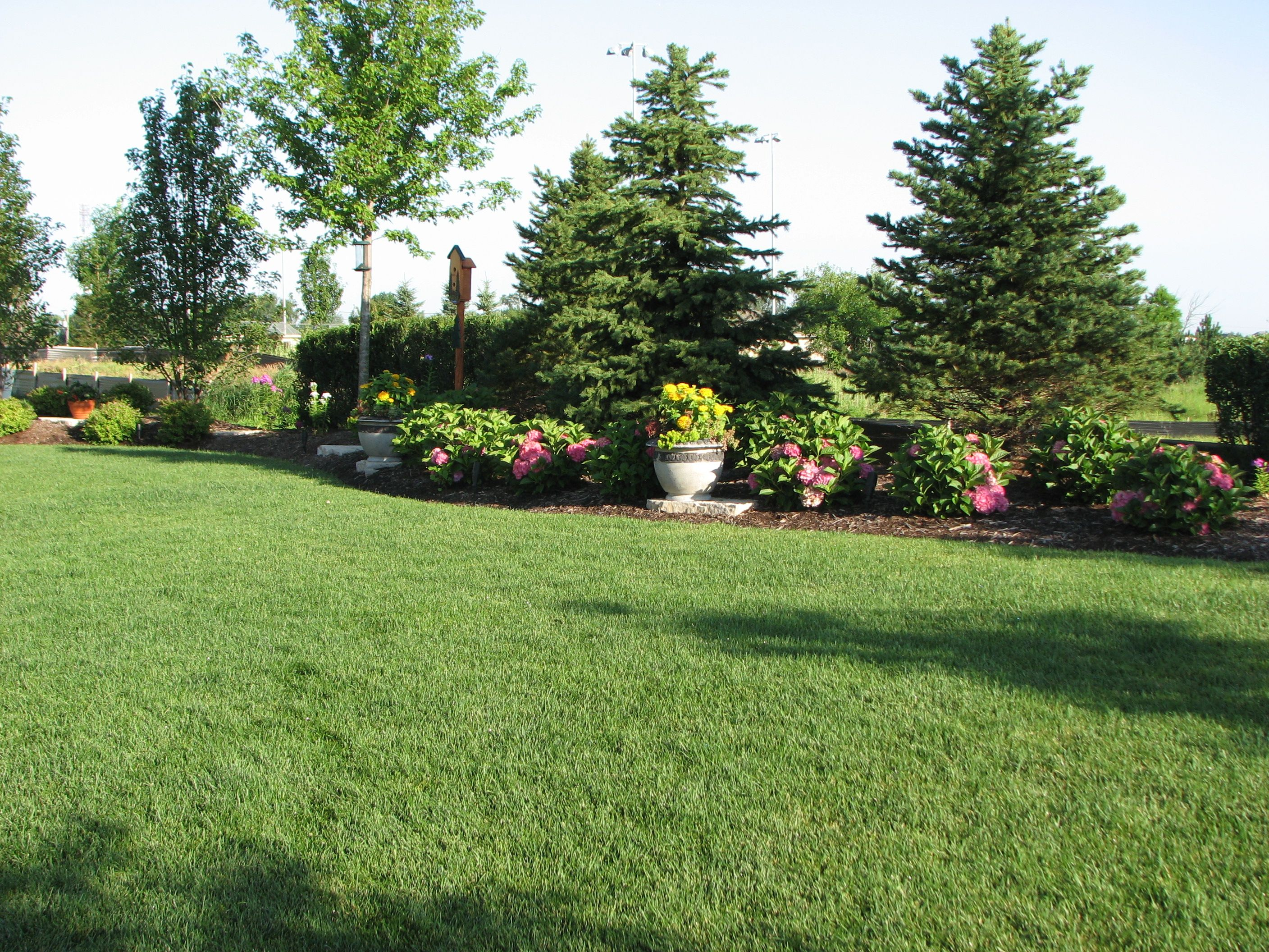 Backyard Landscaping For Privacy Existing Home Landscaping