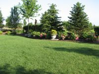 backyard landscaping for privacy | Existing Home ...