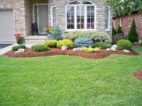 evergreen shrubs for landscaping | Swerving garden bed ...