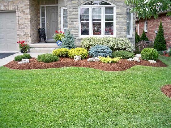 evergreen shrubs landscaping