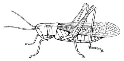 happy grasshopper coloring page.jpg 961×475   Heart of ...