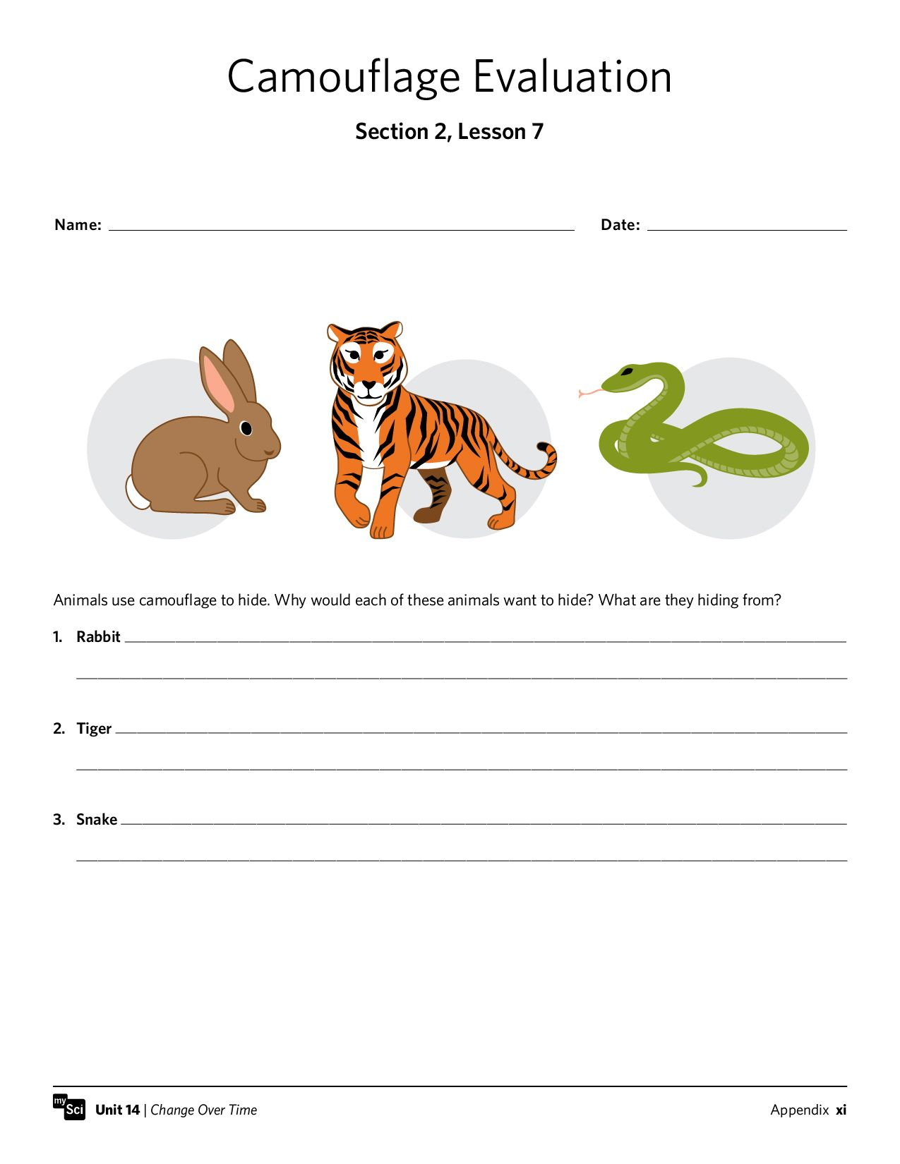 Camouflage Worksheet Free Mysci Handout Animals