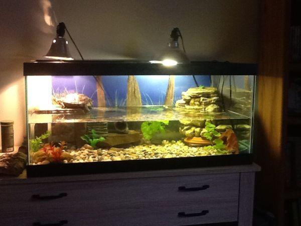 Redeared slider tank setup Turtle Aquariums