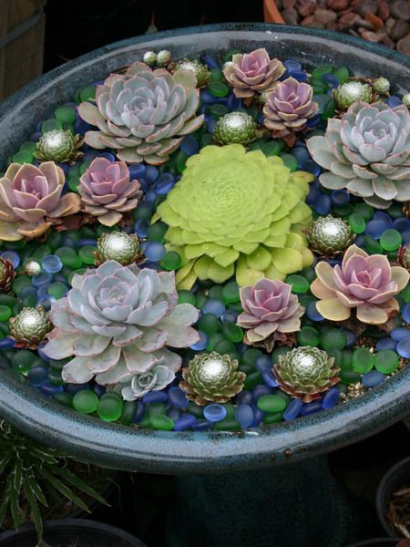 35 Indoor And Outdoor Succulent Garden Ideas Shelterness