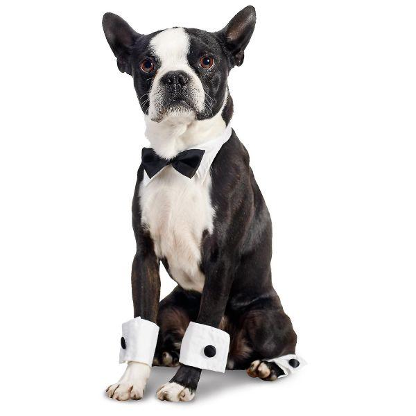 just handsome Boston Terrier Bow Tie Set Halloween Dog