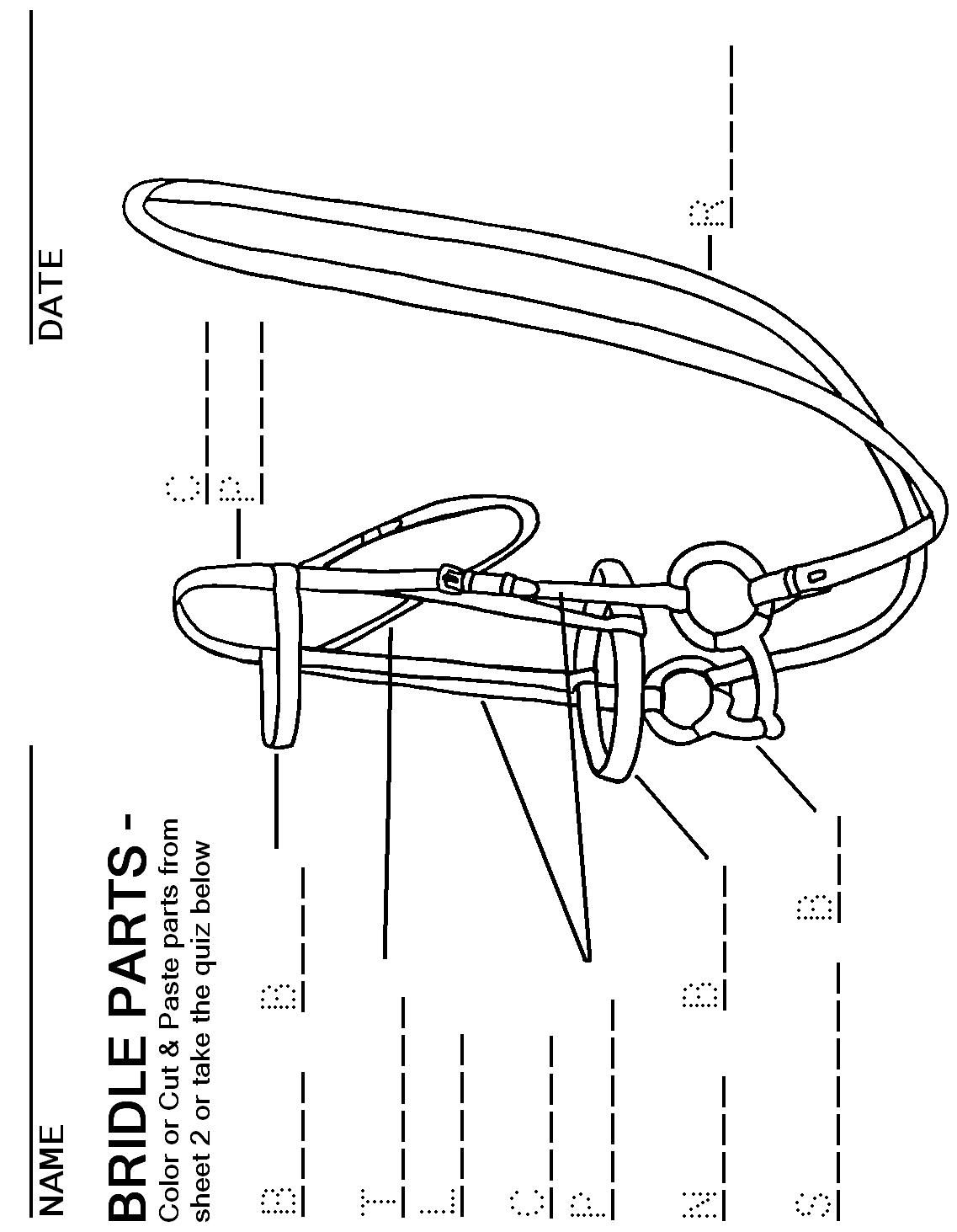 Bridle Parts: fill the blanks #Horsemastership #glenlyon