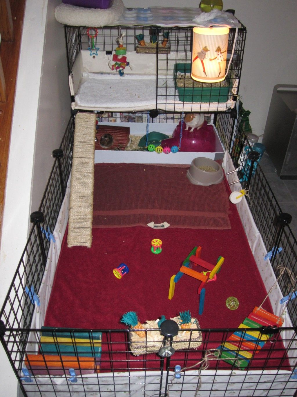 are guinea pigs easy to potty train