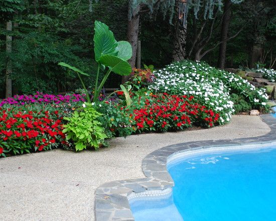 Tropical Pool Landscaping Ideas Lots Flowers