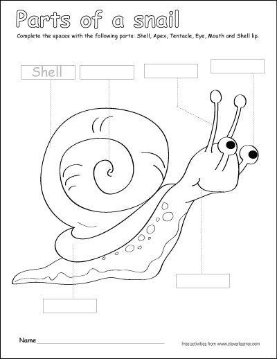 Label and color the parts of the snail activity for