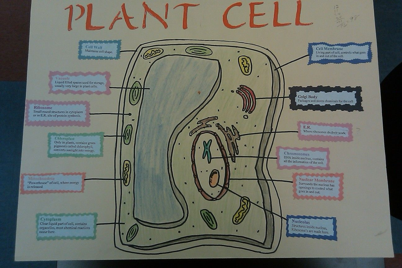 plant cell diagram with definitions dodge caliber alternator wiring project pinterest and school