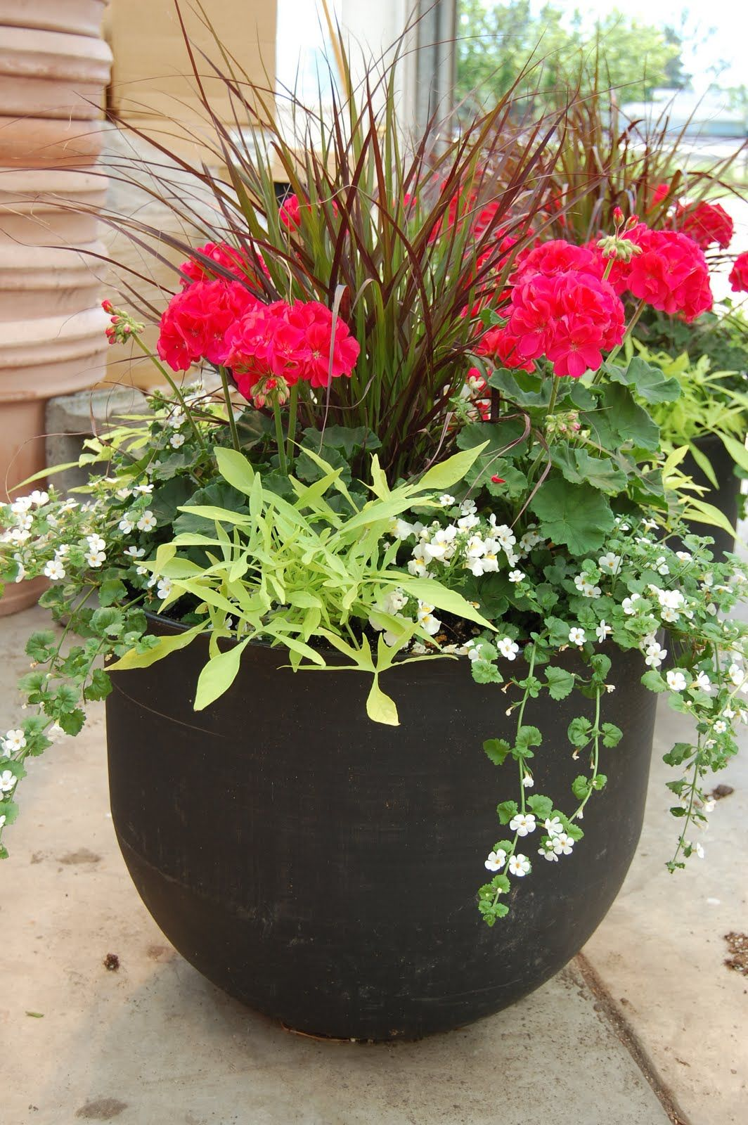 Images Of Potted Plant Ideas How To Plant A Patio Pot Container