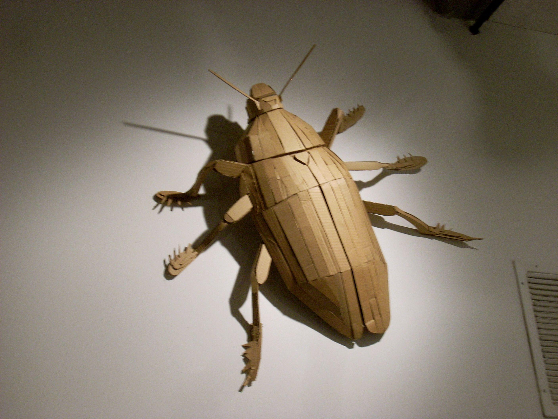 Cardboard Beetle