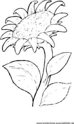 Ausmalbild Sonnenblume sonnenblume Pinterest