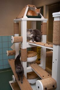 cat tree design plans - Google Search | Furniture Planning ...