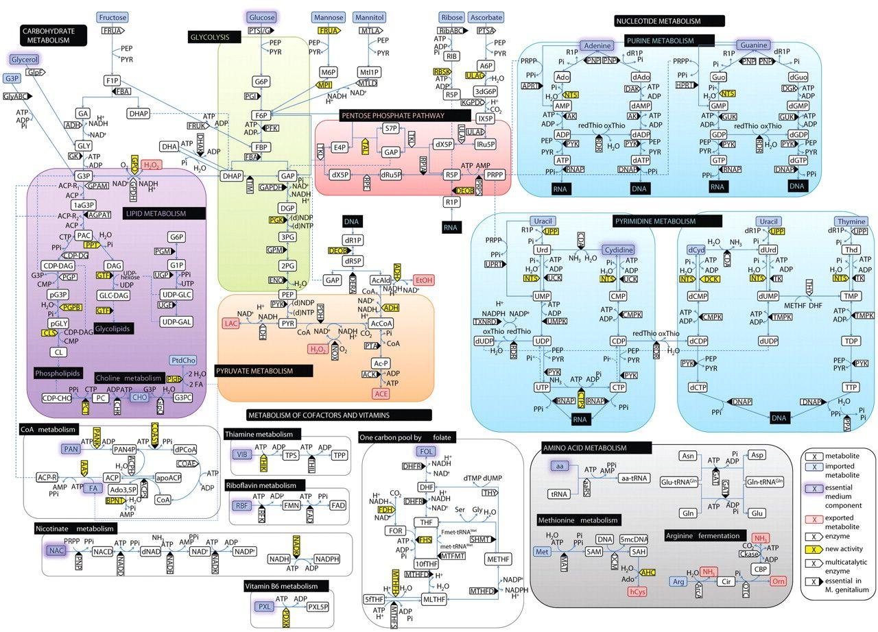 Abbey Caravan Wiring Diagram Glucose Metabolism Diagram Metabolic Pathway Reminds