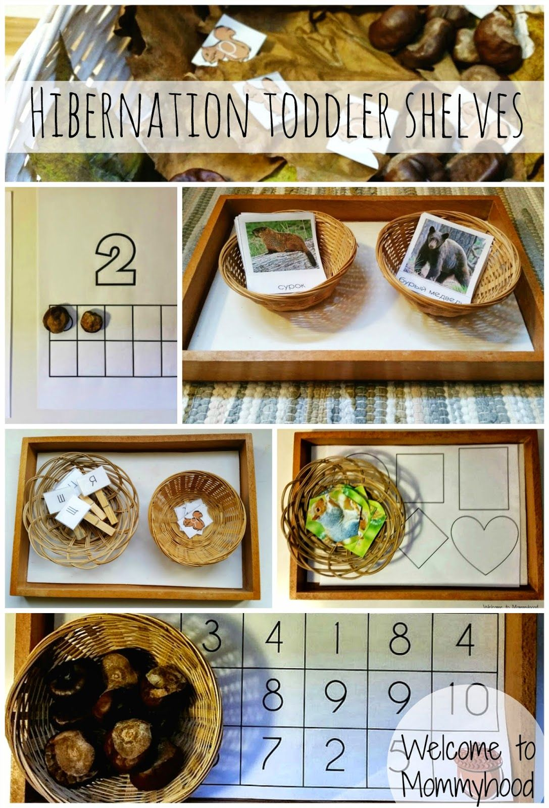 Science Activities For Preschoolers And Toddlers Hibernation Printables Welcome To Mommyhood