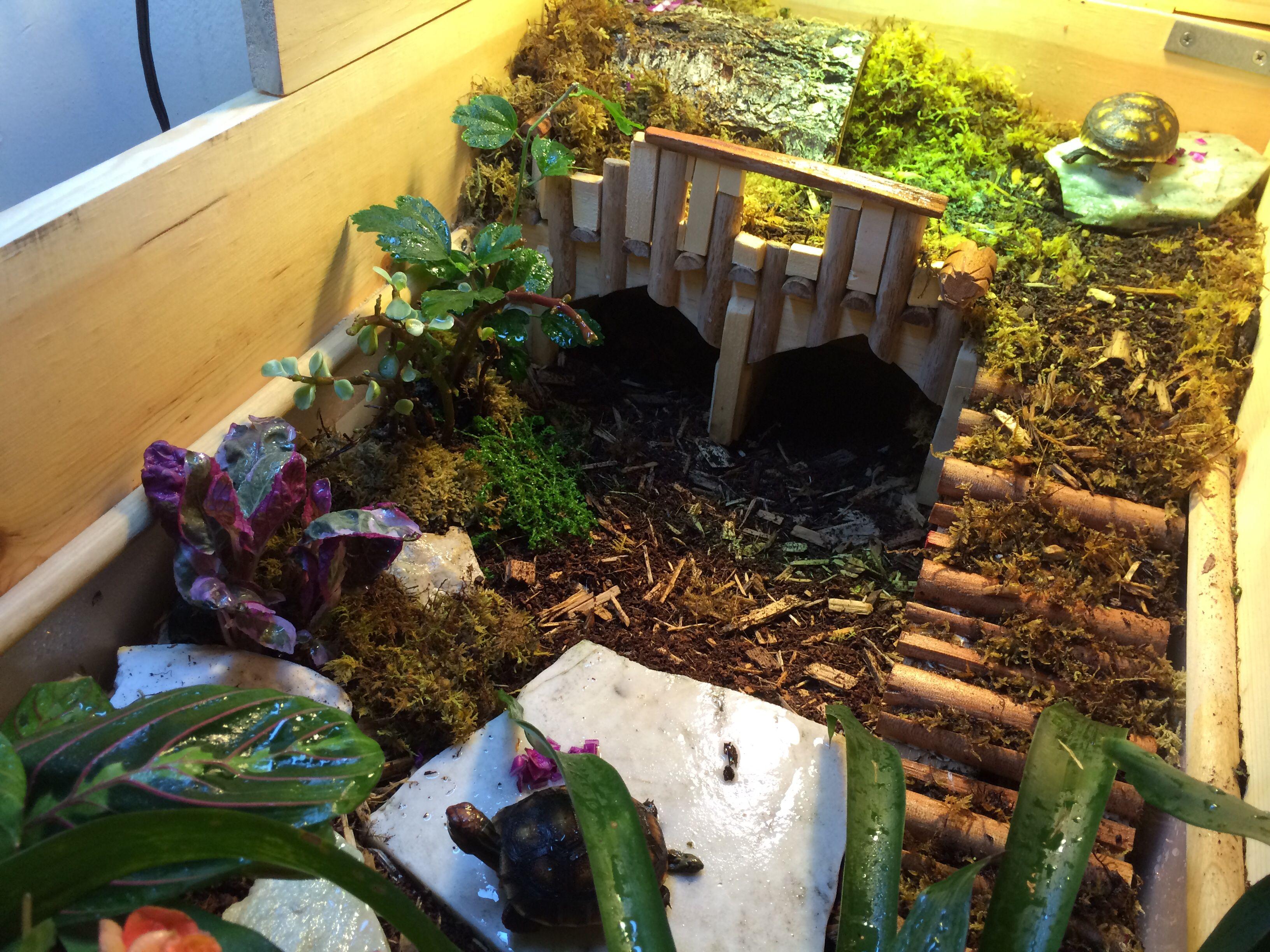 Great Tortoise Table Russian Tortoises Pinterest Tortoise