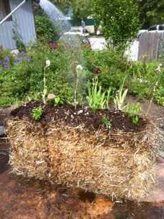 Alternative Vegetable Garden Straw Bale Gardening Easy And