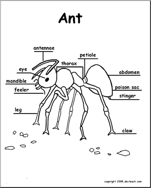 diagram of an ant life cycle worksheet single phase run capacitor wiring labelled - google search   science pinterest fun learning