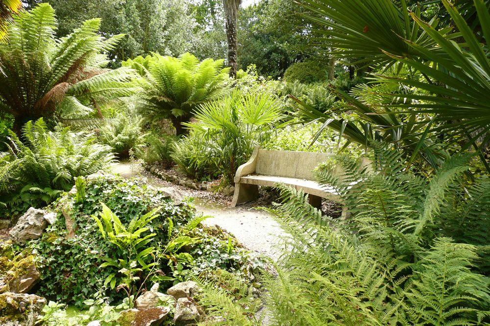 Image Result For Tropical Fern Gardens Planting Pinterest