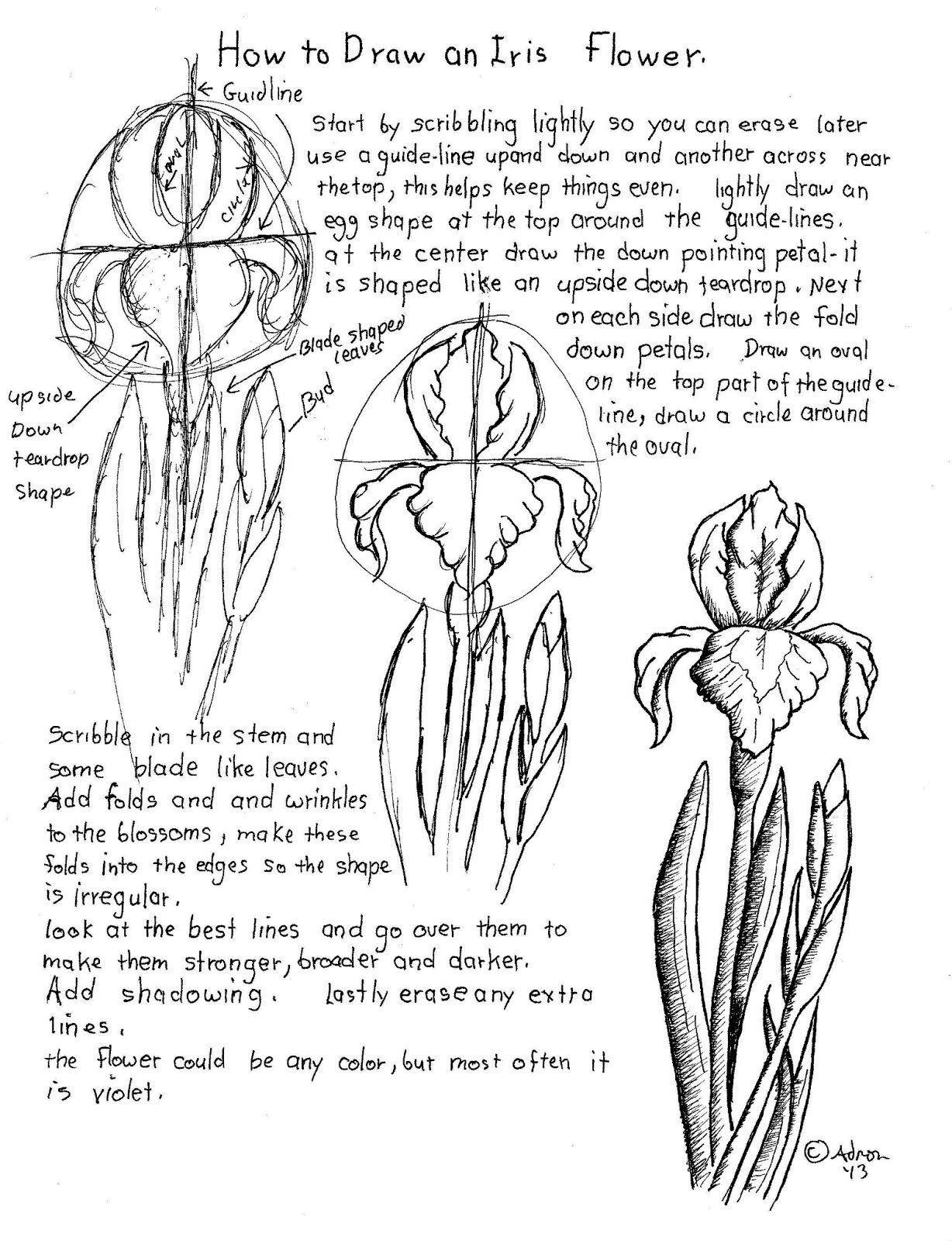 How To Draw An Iris Flower Worksheet Project Notes At The