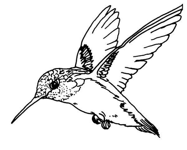 Hummingbird Coloring Pages Welcome Bingo Slot Machines