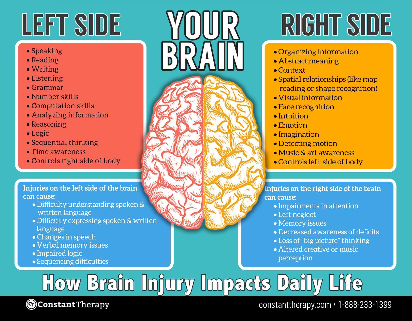 Left Side Vs Right Side Of Brain