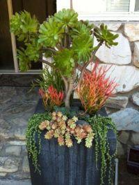 Simply Succulent Plant Designs- Los Angeles, Orange County ...