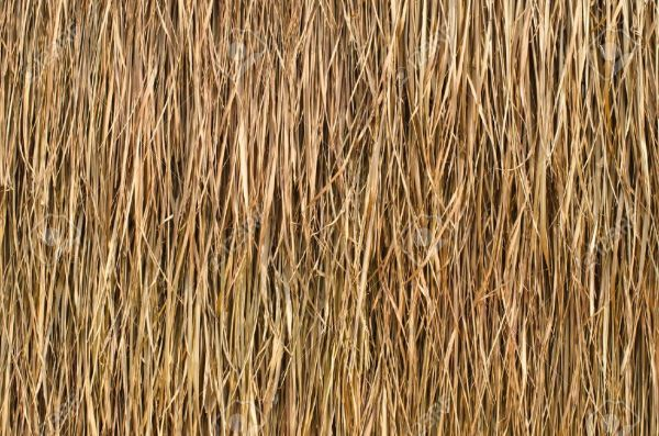 Thatch Roof Texture