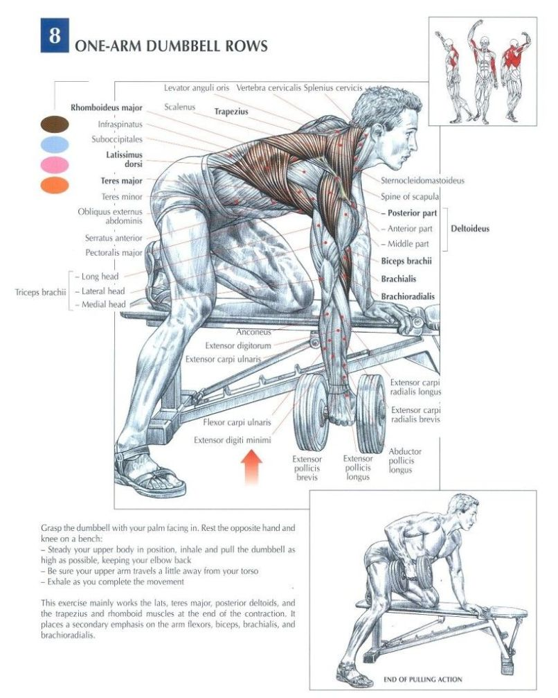 chest workout routine for mass   Yourviewsite.co