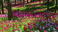 Beautiful Gardens With Pink | Beautiful Multi Colored ...