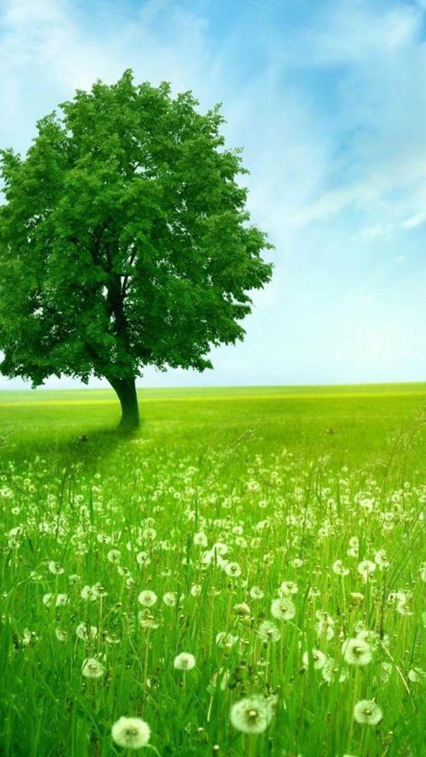 green tree. beautiful nature landscape