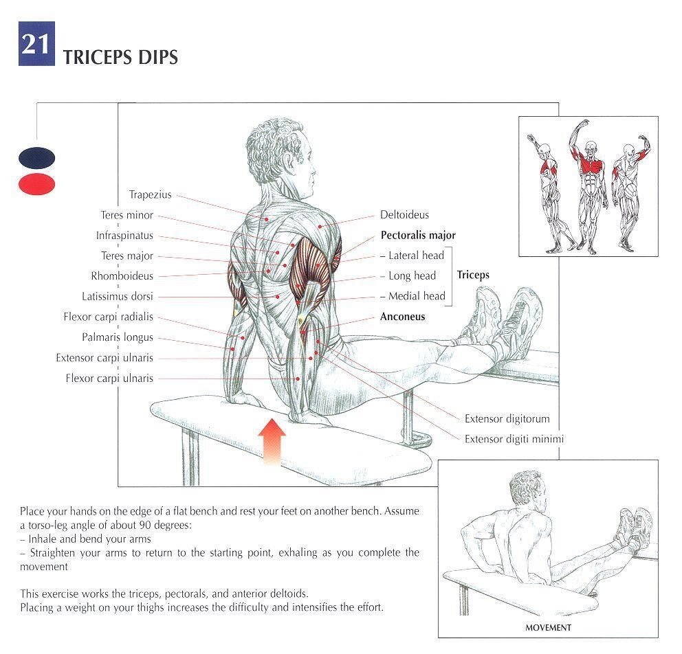 abs anatomy diagram