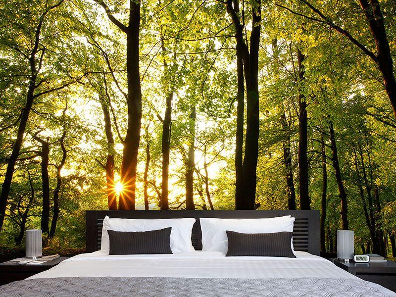Fototapete Sonnenuntergang zwischen den Bumen  Living  Pinterest  Fototapete