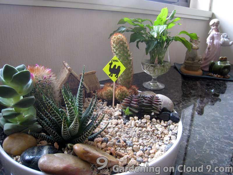 Indoor Garden Cactus Garden Idea Garden Pinterest Zahrady