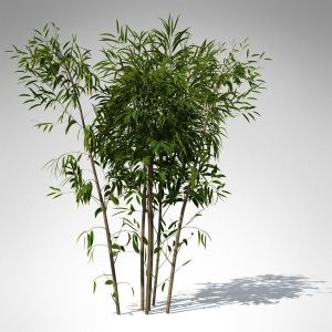golden bamboo plant 3d max  XrogPlants Golden Bamboo by xfrog | design | Pinterest | Golden