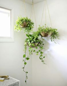 More plants please embrace the jungalow trend with these easy plant decorating ideas that make  home feel lived in and relaxed also pin by rosa alc on pinterest rh