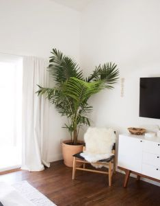 Indoor plants home decor ideas planters hanging clean air also rh nz pinterest