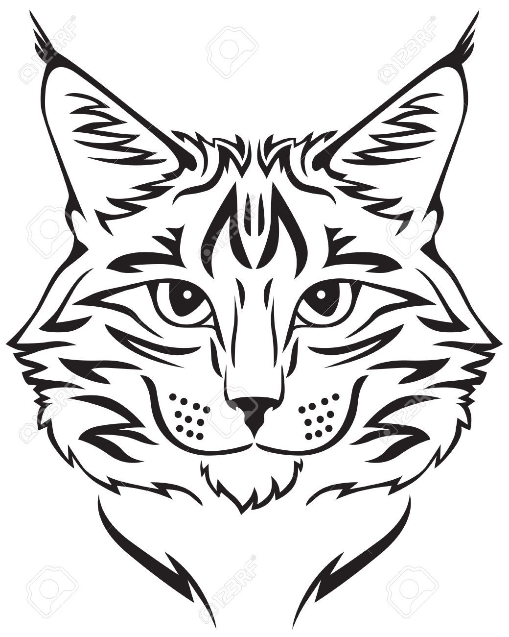Contour Image Of Muzzle Flurry Maine Coon Cat