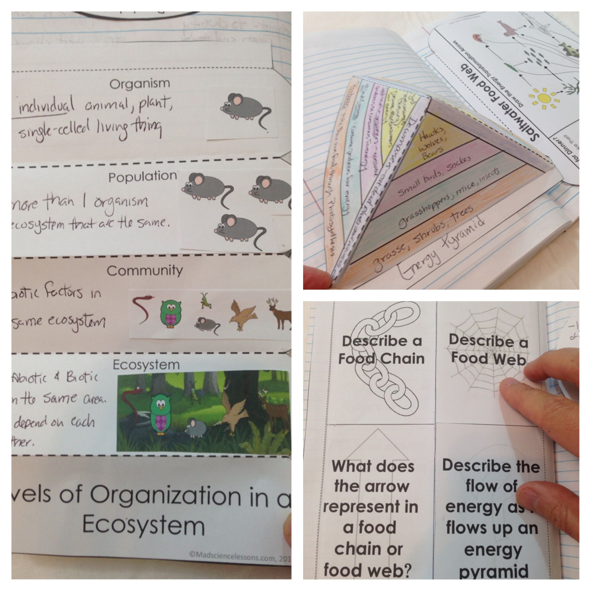 Ecosystems Interactive Notebook Pages