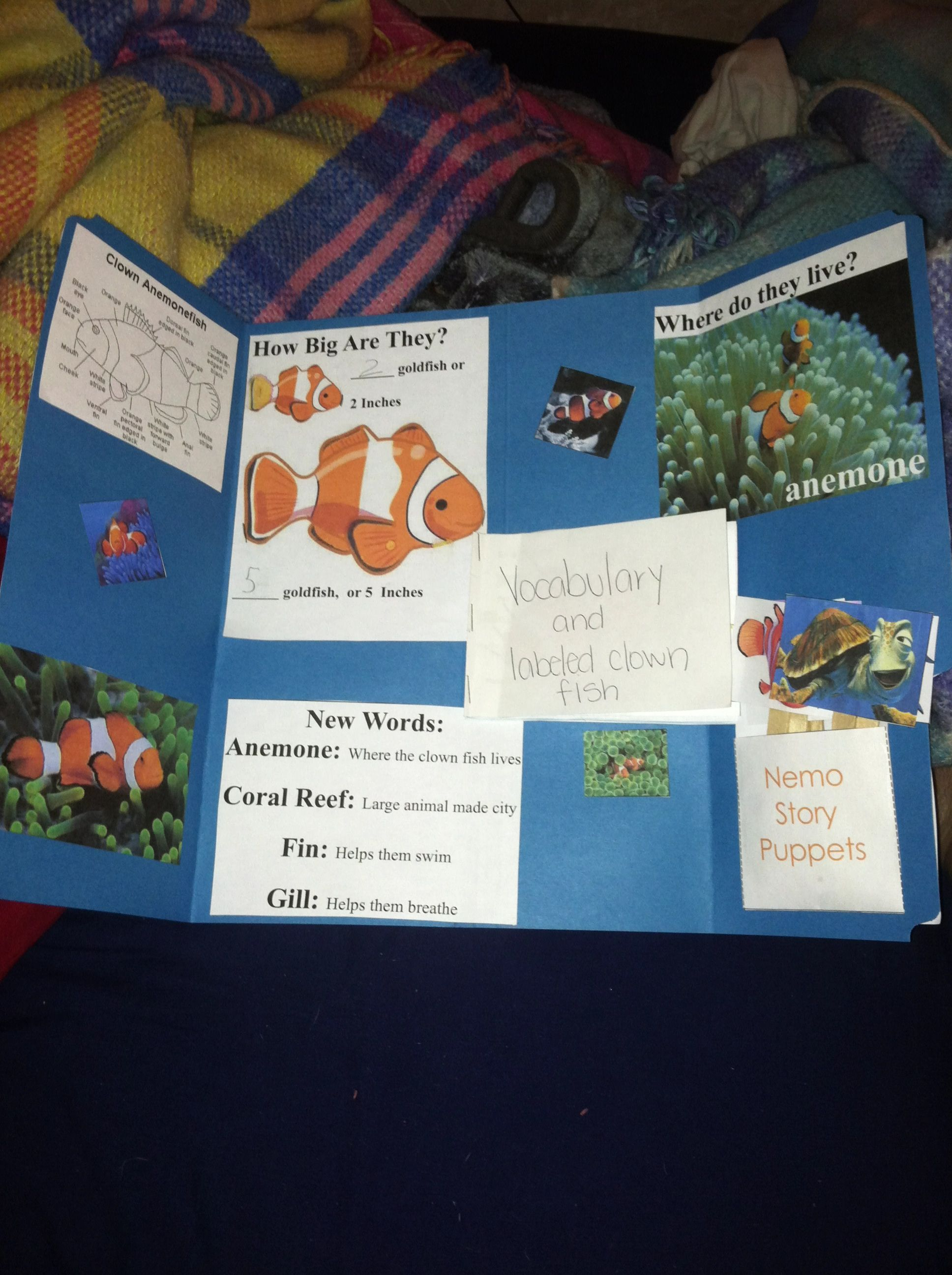 Clown Fish Lapbook We Got This From