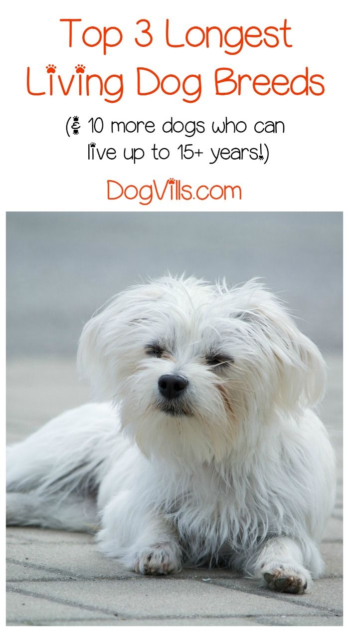 Life Dogs Span Longest