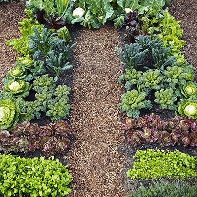 Plant A Cool Season Vegetable Garden Gardens Vegetables And
