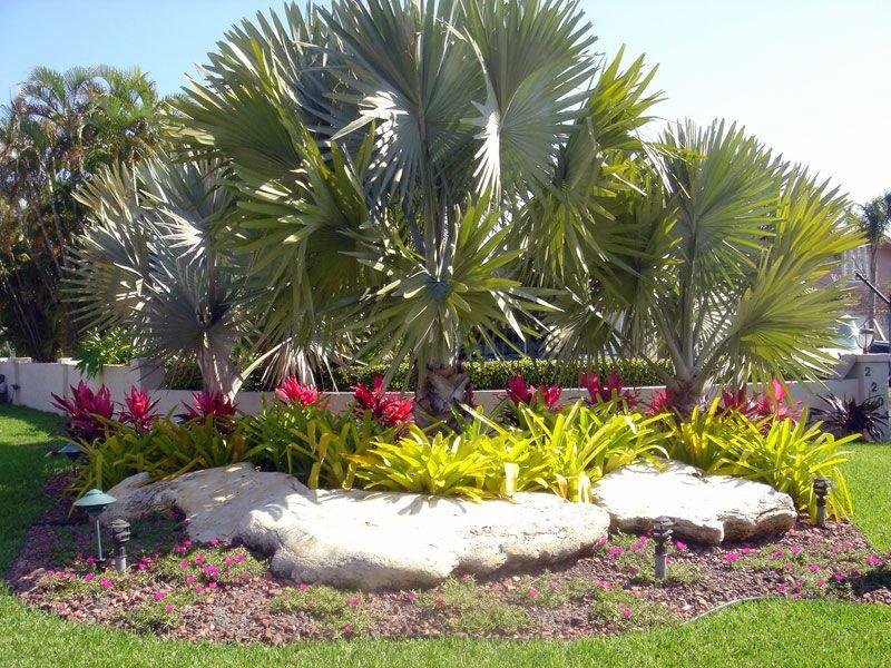 South Florida Landscaping Google Search Garden Pinterest