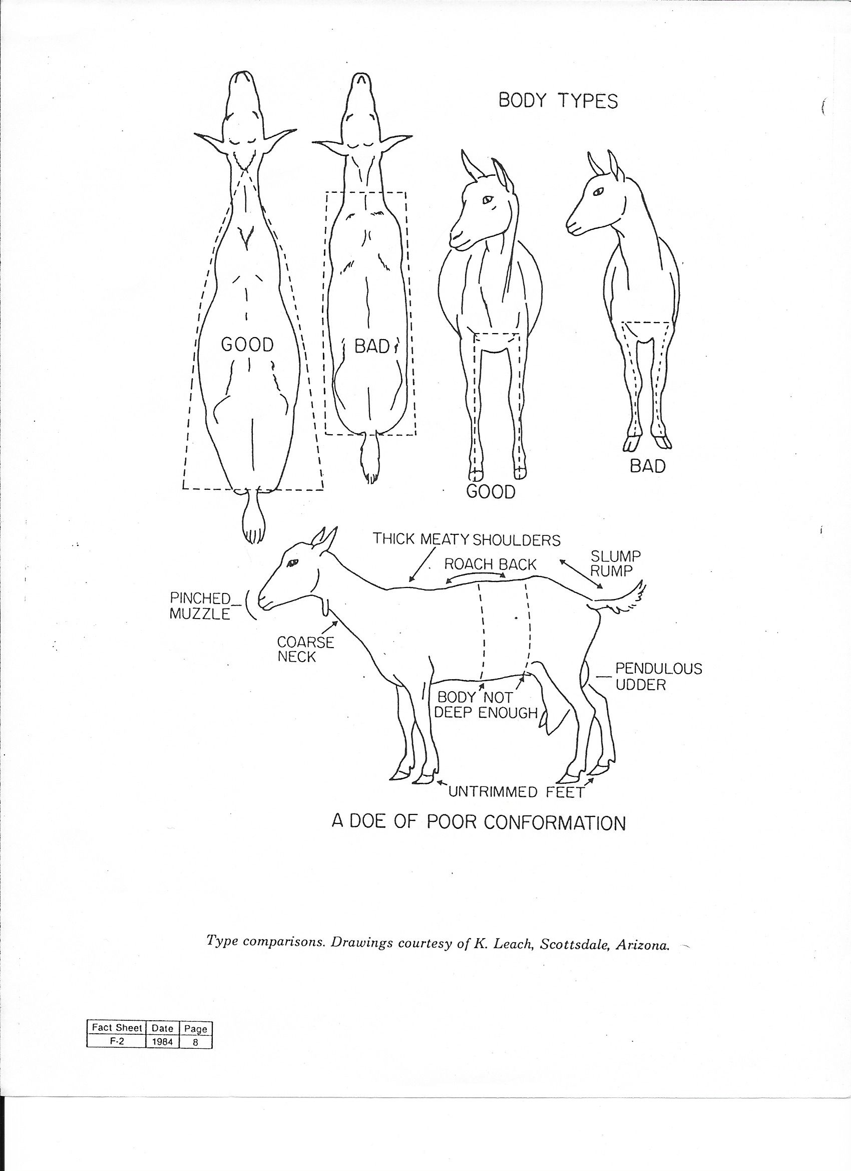 4 h pig diagram project management network critical path boer goat parts  wiring and engine
