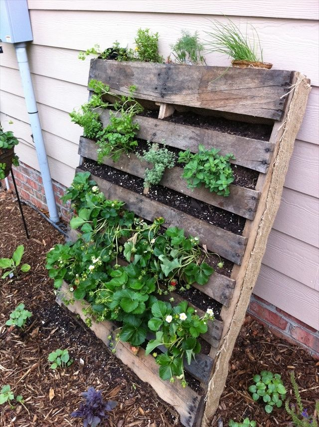 Refresh Your Eyes And Mind With Pallet Vegetable Garden Gardens